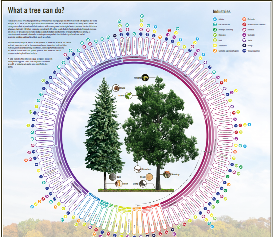 What a tree can do? New poster explains the bioeconomy potential of a tree
