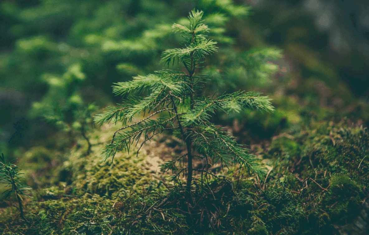 19 June 2020, 10-12h CEST Public Webinar: Climate effects of the forest-based sector in the European Union