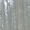 Guidance on EU Timber Regulation jeopardises competitiveness of the forest-based sector