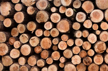 Letter to European Commission on EU timber regulation